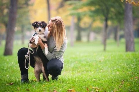 A Step By Step Guide to Become a Pet Sitter