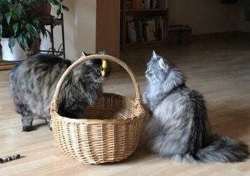 Cosima und Clara