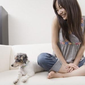 Bester Tagesbetreuung für Hunde in Deiner Nähe