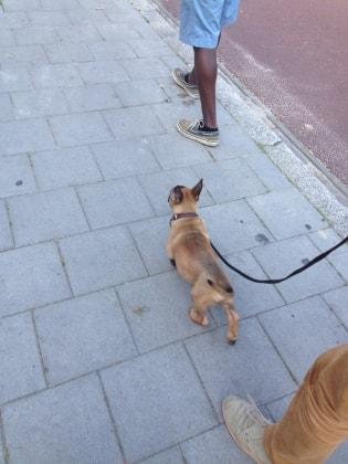 Katie in Nijmegen back image