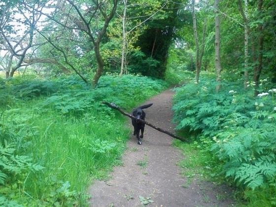 Lara in Glasgow back image