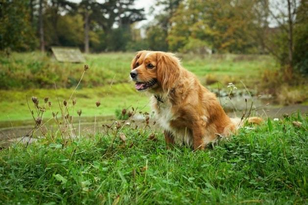 Phoebe in Teddington back image
