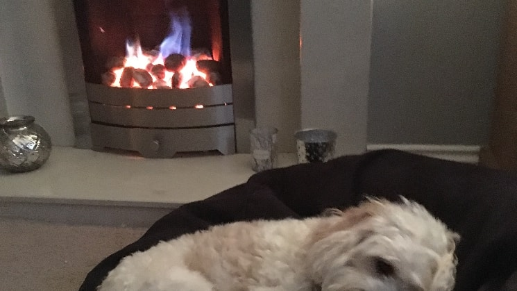 Gaynor in Prenton back image