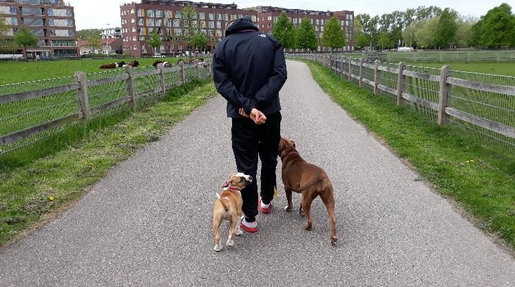 Kevin in Arnhem back image