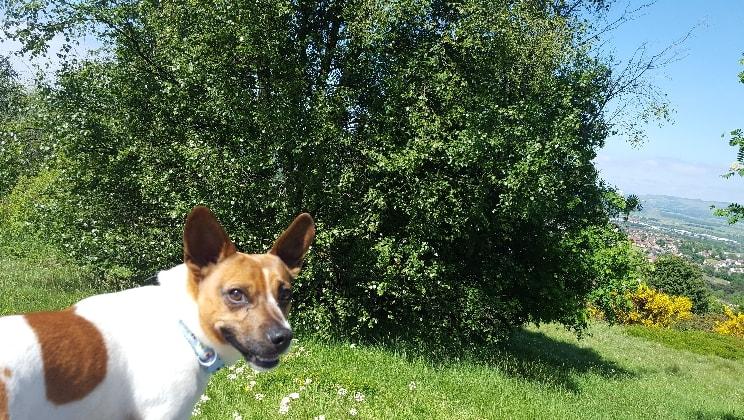 Lisa Leads Lassie ! in Renfrew back image
