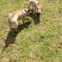 Baxter, Poppy