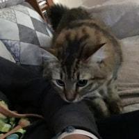 Milly, Cleo