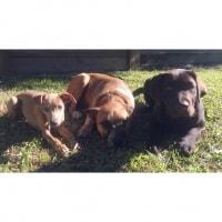 Bentley, Willow , Sam