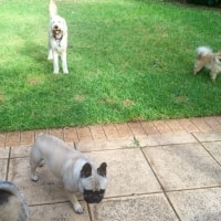 Baxter, Kingsley, George